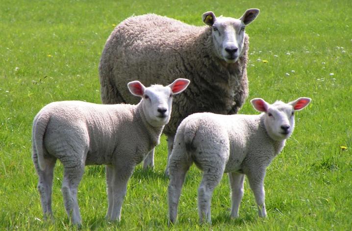 éleveurs - Arcour : négoce en céréales biologiques