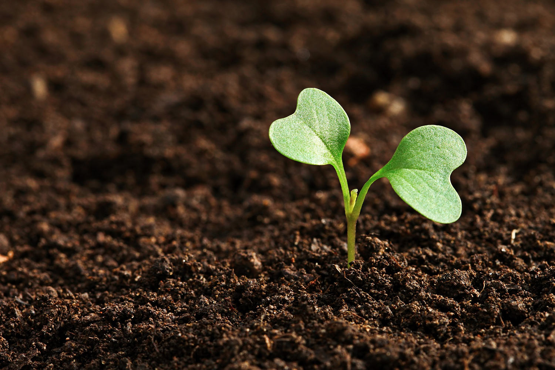La semence paysanne bio verra le jour en 2021