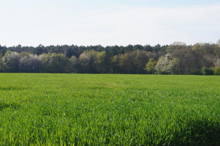 grande culture - Arcour : négoce en céréales biologiques