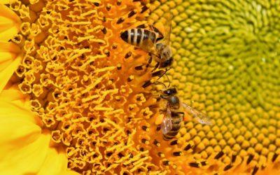 L'agriculture bio serait plus résistante que l'agriculture conventionnelle