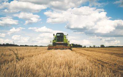 État des lieux de la récolte de céréales biologiques